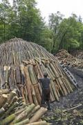 A man is building a charcoal pile - Charcoal pile