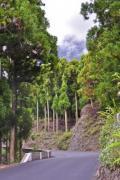 Asphalt road in the tropical forest - Asphalt road
