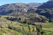 The Inca's terraces in the Colca Canyon - Colca Canyon