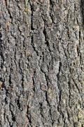 Closeup of the bark of a tree - Tree bark