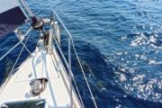 Dolphines swimming with the sailboat - Sailboat