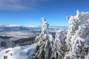 Snowy landscape with trees in the foreground - Snowcapped