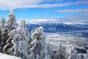 Snowcapped pines with a wonderful view - Snow-bound