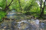 A stony creek with green leafy trees - Creek with lush green trees