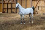 A white horse standing in a big barn - White horse