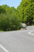 A winding road with verdant trees - Winding road