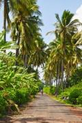Palm trees on Comoros islands - Palm-lined road