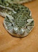 Macro shot of a snake - Viper