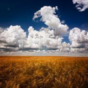 Summer field and clouds, a square format image about beautiful summer scenery - Summer field and clouds