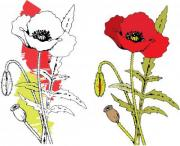 Colored red poppy. Hand drawing. - Red poppy