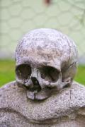 A small skull on a stone - Human skull