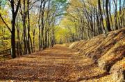 Wide road in the forest covered with fallen leaves. - Forest road