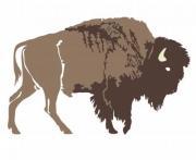 Buffalo. Hand-drawn illustration. Design for logo, t shirt, bag etc. - Buffalo