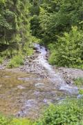 A creek rushes through the wood - Rushing creek