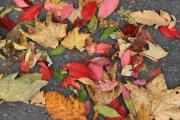 Colorful autumn leaves on the road. - Autumn leaves