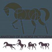 'Anatomy' of a horse pictogram; sample of the construction. Added four horse pictograms which can be used as a logo, illustration, graphic elements etc. - 'Anatomy' of a Horse Pictogram