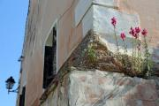 Flowers grow on the wall of an old building - New life