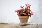 flowerpot in front of a white wall - potted flower