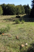 Brown mushrooms on the glade - Mushrooms on the glade