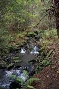 A little brook in the forest - Forest stream