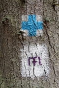 Virgin Mary pilgrimage symbol with blue cross on a tree - Tourist symbols