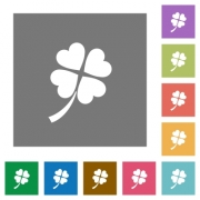 Four leaf clover flat icons on simple color square backgrounds - Four leaf clover square flat icons