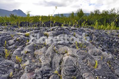 Black pumice - Black volcanic pumice on Reunion