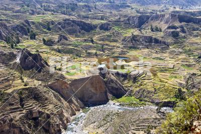 Colca canyon - Great view on the Inca's terraces in the Colca Canyon