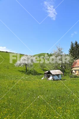 Country spring - Old house on the spring meadow