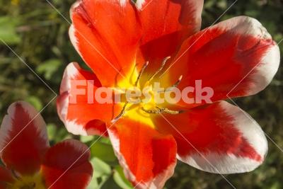 Field flower - Fields of flowers in the botanical garden