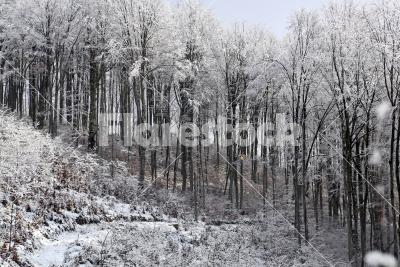 Into the snowy forest - A path leading into the winter forest
