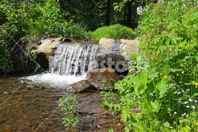 Little Falls - Stream water rushing through a tree trunk