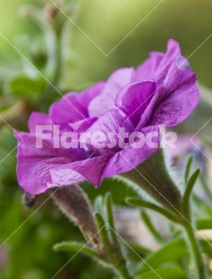 Pink flower - spring flower photo shoot colse up