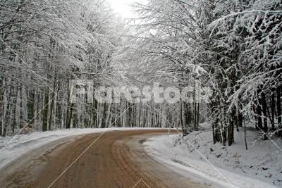 Road among snow-bound trees - Highway in the winter forest