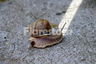 Snail's on-line - A snail is making a turn to the white line