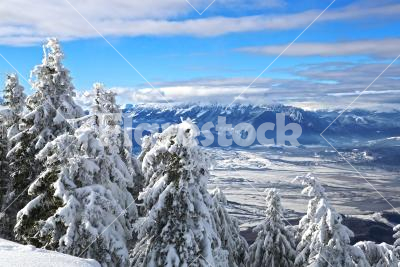 Snow-bound - Snowcapped pines with a wonderful view