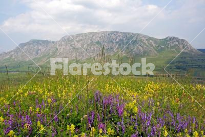 Spring meadow - A spring meadow with a rocky mountain in the background