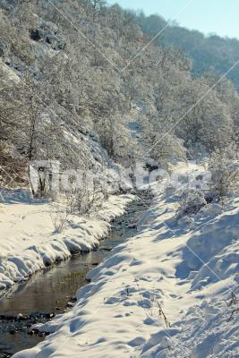 Winter stream - A stream in winter with snowy trees